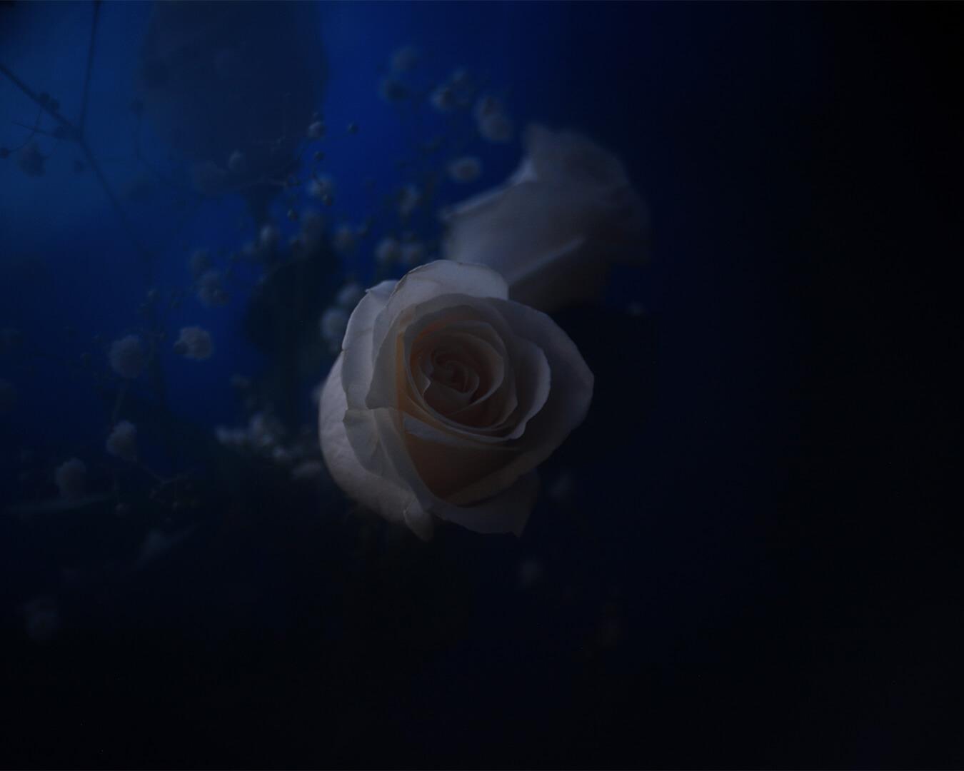 Alexander_Hofstetter_Alba_Rosa_II