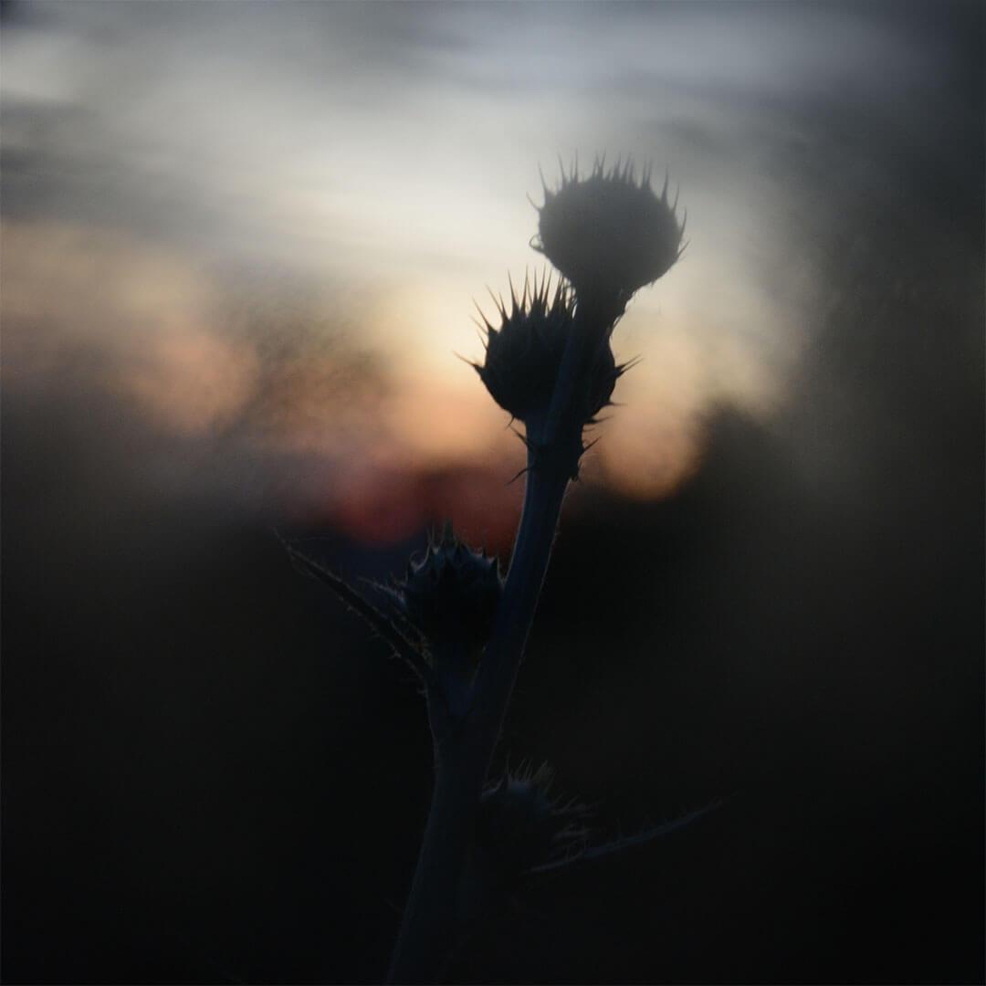 Alexander Hofstetter. Shadows Of Spring I