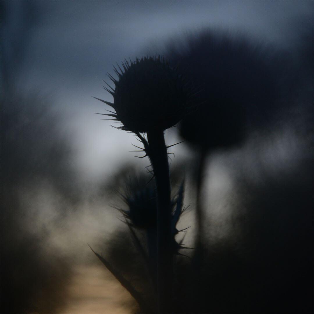 Alexander Hofstetter. Shadows Of Spring II