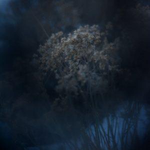Alexander Hofstetter. Winter Blue II