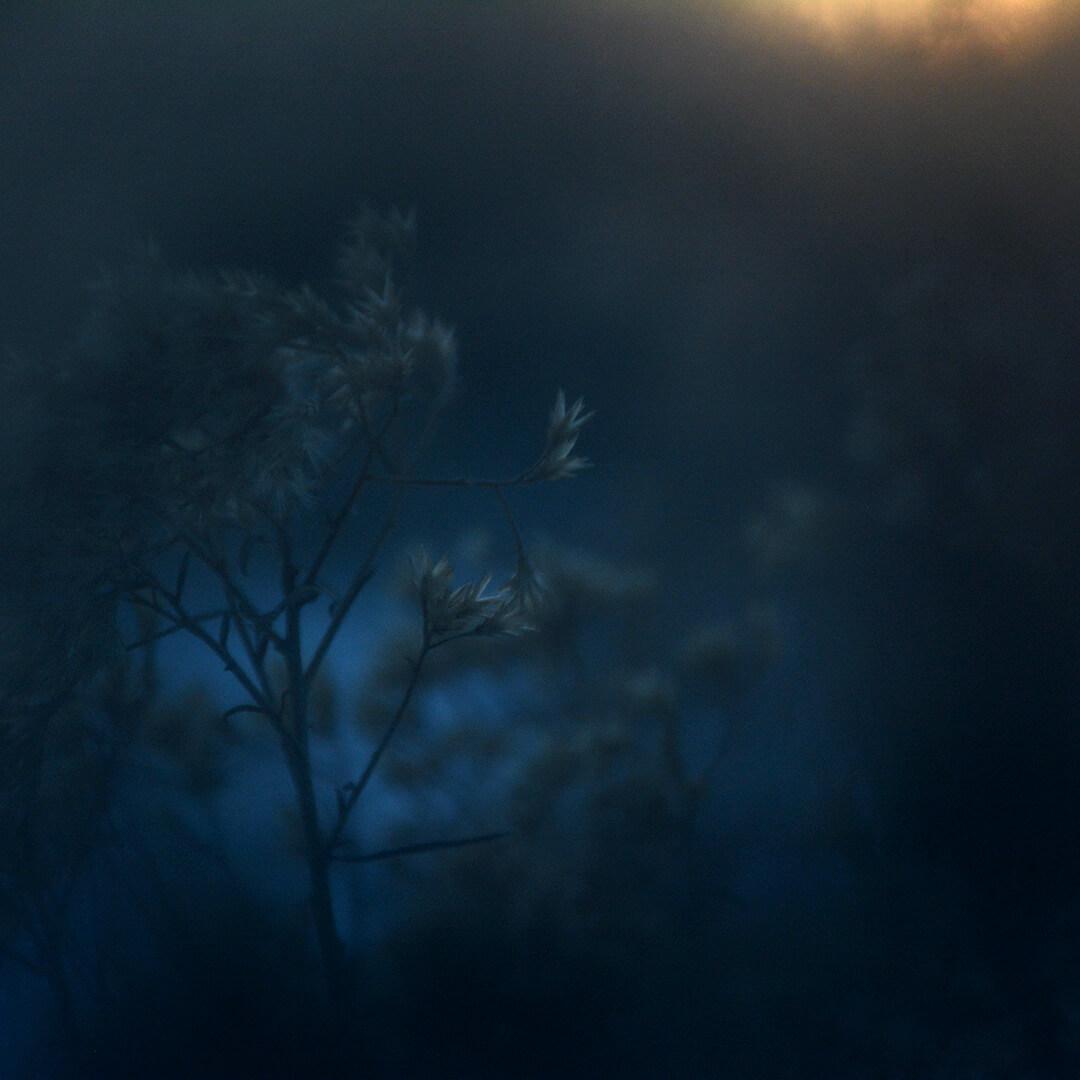 Alexander Hofstetter. Winter Blue III